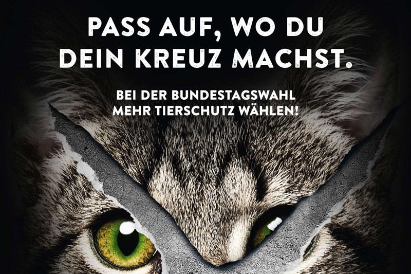 Copyright: Deutscher Tierschutzbund e.V.