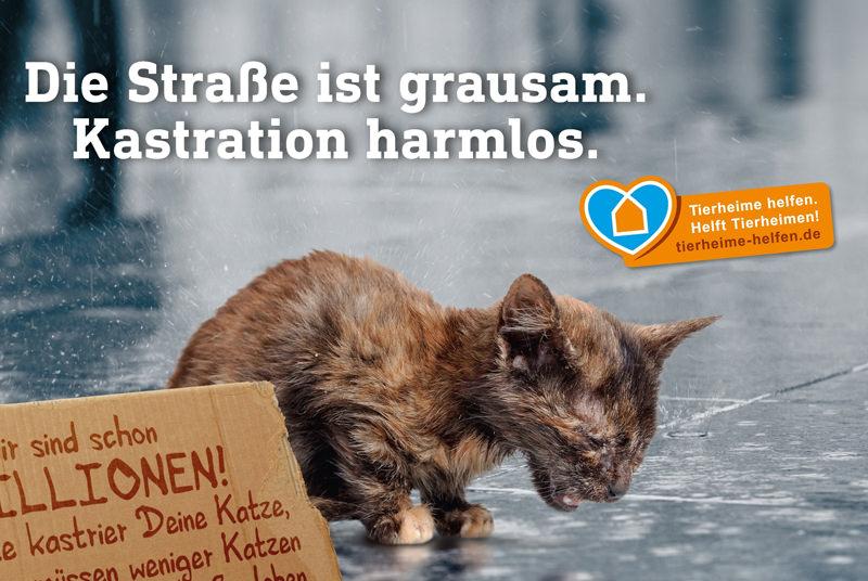 """Mit der Kampagne """"Die Straße ist grausam. Kastration harmlos."""" macht der Deutsche Tierschutzbund auf die Wichtigkeit der Katzenkastration aufmerksam."""