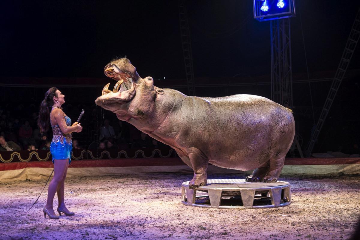 In Deutschland gibt es noch immer kein Wildtierverbot in Zirkussen.