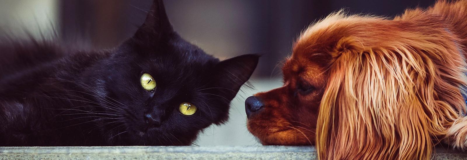 Tierschutz für Hunde und Katzen