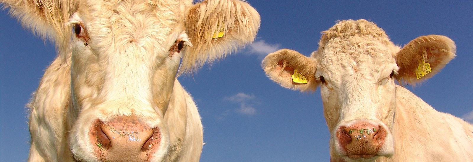 Tierschutz in der Landwirtschaft