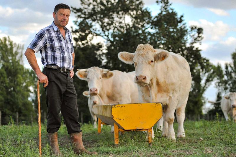 Billigpreise schlecht für Tiere und Landwirte