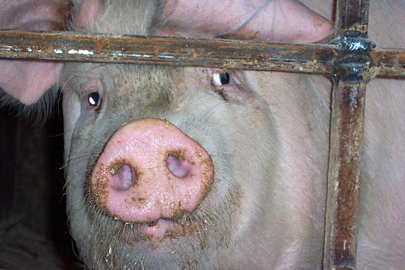 Aus für den niedersächsischen Tierschutzplan