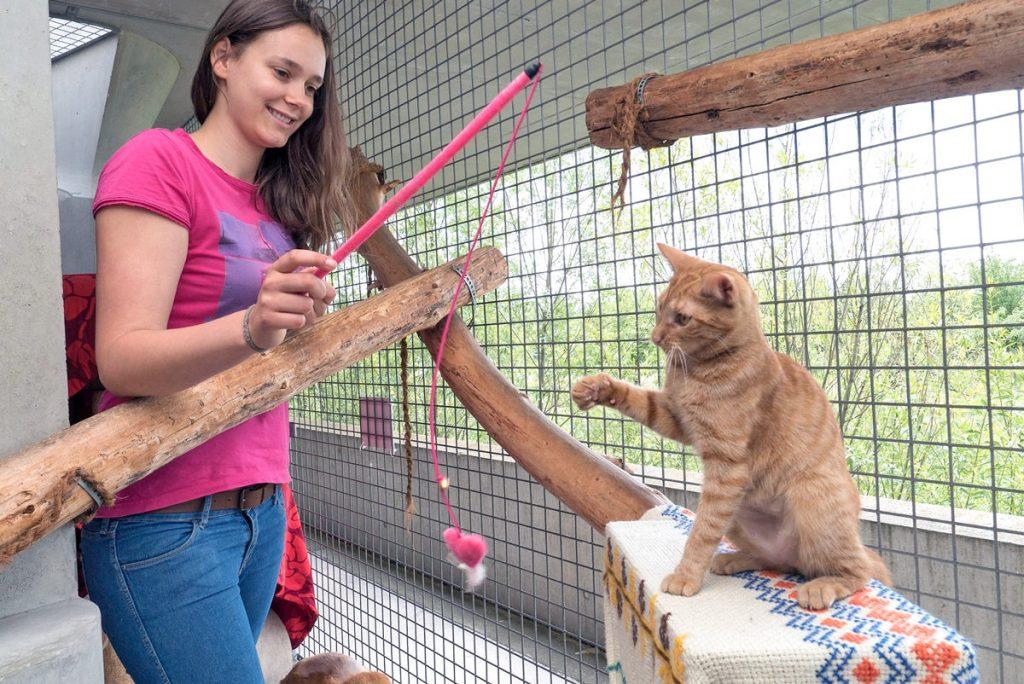 Bewerbungsphase für Jugendtierschutzpreis gestartet