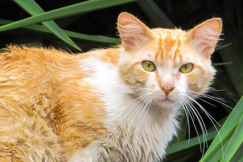 Tierschutz für Katzen