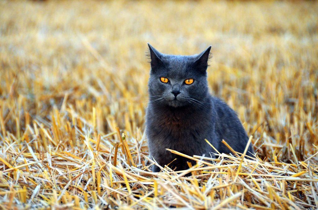 Jagdgesetz Abschuß Hauskatzen